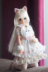 Fuwa-fuwa (Julia Lovett) Tags: azonedoll sahra 16 cat maid pureneemo