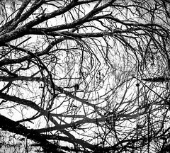 Dark reflections (jesserepo) Tags: abstract autumn black blackandwhite branch chaos complexity contrast dead deadtree disorder experimental graphic lake maximalism mirror mirrored nature outdoor pond reflection reflections shadow surface texture tree treebranches treetrunk trees water winter