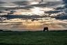 Caballo junto al mar (ccc.39) Tags: asturias gozón costa cantábrico caballo contraluz cielo nubes rayos mar prado horse sky clouds