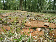 Grass And Bricks. (dccradio) Tags: whiteoak nc northcarolina bladencounty outdoors outside harmonyhall harmonyhallplantation museum park tree trees greenery leaf leaves grass brick bricks old antique vintage classic groundlevel sky wooded landscape woods forest nature natural bench picnictable canon powershot elph 520hs