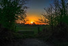 Barnet sunset (PhredKH) Tags: canonphotography fredkh photosbyphredkh phredkh splendid sunset barnet london northlondon twilight outdoorphotography ef2470mmf4lisusm 2470mm canoneos5dmarkiii grass tree sky wood landscape