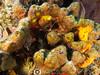 Arrow Crab (R. Donald Winship Photography) Tags: aquaticlife arrowcrab cozumel divingunderwater paradisereef