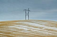 Power Pole in Winter Stubble (Bracus Triticum) Tags: power pole winter stubble saskatchewan サスカチュワン州 canada カナダ 12月 december 2017 平成29年 じゅうにがつ 十二月 jūnigatsu 師走 shiwasu priestsrun