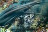 20180422-DSC_0464.jpg (d3_plus) Tags: d700 drive fish marinesports apnea fishingport 景色 185mm watersports sky マリンスポーツ ニコン nikon 素潜り ウォータープルーフケース inonuwlh10028m67type2 nikon1j4 漁港 海 nikond700 地形 scenery イノン ズーム nikon1 waterproofcase landscape 1nikkor185mmf18 izu sea 185mmf18 underwater ワイドコンバージョンレンズ skindiving uwlh10028m67 wpn3 japan 50mmf18 50mm dailyphoto nikonwpn3 水中 nikkor スキンダイビング 息こらえ潜水 port 自然 inon snorkeling ワイコン nature ニコン1 diving zoomlense wideconversionlens 風景 eastizu j4 空 日本 東伊豆 daily シュノーケリング 魚