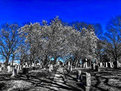 """""""Unlimited tolerance must lead to the disappearance of tolerance."""" ―Karl R. Popper 🌸 (anokarina) Tags: appleiphone8 🌳 🌺 🌸 rockcreekcemetery stpaulsepiscopalchurch forttotten adobephotoshopexpress psmobile colorsplash blue blossoms blooms flowers spring pink white graveyard cemetery tombs graves gravestones tombstones perspective noir"""
