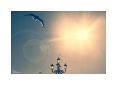 ... (ángel mateo) Tags: ángelmartínmateo ángelmateo cádiz andalucía españa andalusia spain amanecer dawn sunrise campodelsur calma farola contraluz sol malecóndecádiz gaviota vuelo rayos cielo calm lamppost backlight sun seagull flight rays sky