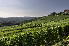 Terre del Barolo_Y3A9428 (candido33) Tags: barolo lamorra paesaggidelvino piemonte serradenari alba aurora filari vigne vigneti vitigni