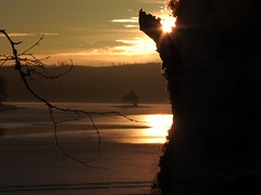 Ice reflection! (roos_ake) Tags: nature lake ice reflections winter snow landscape trees sunrise woodland