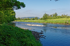 Slow Sunny Day (scottprice16) Tags: england lancashire clitheroe westbradford river riverribble ribblevalley ribbleway ldnp water flow colour fells longridgefell trees outdoors leisure sun sunny weather spring summer may 2018 countryside green blue sky bank canong3x