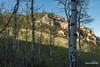 Aspen Bark (kevin-palmer) Tags: nikond750 may spring wyoming evening tamron2470mmf28 green grassy bighornmountains bighornnationalforest cliffs aspen bark trees blue sky sunny sunshine shadows grove buffalo