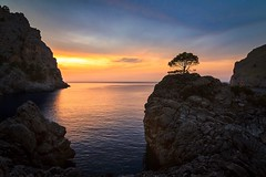 The magic Tree (dietmargötte) Tags: travelphotography sacalobra seascape landscapephotography trees naturephotography spain isla sunset mallorca