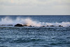 DSC33_18426 (heartinhawaii) Tags: sunset sea seaspray shore splash seasplash lavarocks poipu poipubeachpark settingsun kauai hawaii nature seascape nikond3300