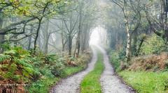 Light at the end (calderdalefoto) Tags: calderdale yorkshire track path forest mist fog