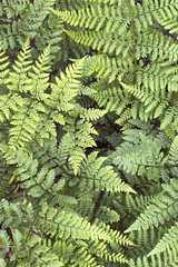 (Girl With Butterfly Wings) Tags: ferns green lovely leaf leaves pretty nature