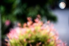 Dreamy Plant (irfriand) Tags: blurry blurred blurr bokeh bokehlicious blurryphoto bokehphoto outdoor plant helios sonya6000 sonyalpha helios442