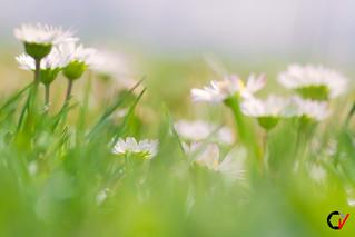 Abstracción Primaveral.
