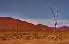 Desert trees (flowerikka) Tags: desert dünen dunes landscape light linien namibdesert namibia nature redcolor sand sky sossusvlei sun trees valley