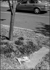 street (Pavel Vrzala) Tags: australia australie canberra 2015 2014 olympus pen ft penft blackandwhite bw 35mm halfframe film act city gungahlin suburb urbanlandscape citylandscape outskirts blackwhite blackandwhitephoto analog analogue analogphotography filmphotography filmcamera times canberratimes kodak kodaktmax100