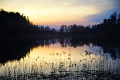 into the darkness (daimak) Tags: sunset dusk evening lake woods water lowlight light landscape lithuania sonyilce7