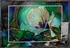 Trionum Dream (PaulO Classic. ©) Tags: hibiscus hibiscustrionum canon umkomaas deepdream picmonkey photoshop smartphotoeditor