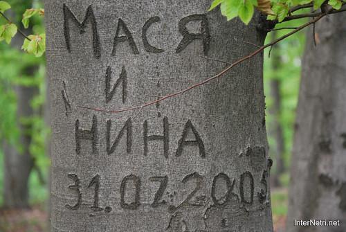Ботанічний сад імені Гришка Буковий гай InterNetri  Ukraine 093