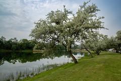 in the Morning (tucsontec) Tags: nature natur travel trees tree bäume baum outdoor tourism landschaft landscape lake wasser water see sky himmel germany rheinlandpfalz baddürkheim