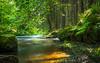 Rur bei Monschau (r.steiling) Tags: rur wasser monschau fluss bach wald sonne langzeitbelichtung nd30 graufilter grün omdem1 outdoor 1240mm pro landschaft landscape long exposure