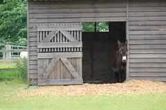IMG_20180529_125315 (Luna-Woona Moon) Tags: donkeys rescue animals equine devon england
