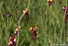 (takafumionodera) Tags: bee chiba flower insect japan olympus penf ミツバチ 千葉 花 虫