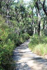 Track to Barrenjoey Lighthouse (destinationsjourney) Tags: kuringgaichasenationalpark australia sydney newsouthwales nature tree trees new south wales aboriginalheritagewalk aboriginal heritage walk bushwalk bush path