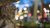 Carl Zeiss Jena Pancolar 55 mm f/1.4 - DSCF1096 (::nicolas ferrand simonnot::) Tags: carl zeiss jena pancolar 55 mm f14 1968 | 8 blades aperture m42 paris 2018 rose green pink depth field carlzeissjena vintage manual german prime lens extérieur profondeur de champ fleur plante bokeh dof fixed focal length east germany ddr grd color flower blue yellow red macro night light pancolar1455 street photography streetphotography