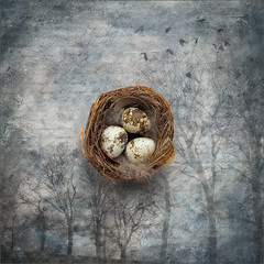 NEST (Stan Farrow Photography) Tags: nes eggs trees winter spring composite square