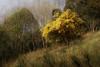 PhoTones Works #9715 (TAKUMA KIMURA) Tags: photones sigma sd quattro h takuma 木村 琢磨 kimura landscape nature snap 風景 景色 自然 mimoza ミモザ tree grass sky field forest