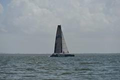 LOX_3871 (Lox Pix) Tags: australia queensland brisbanetogladstone yachtrace catamaran trimaran 2018 bossracing multihull loxpix moretonbay shorncliffe cabbagetreecreek rudder aground sailing loxworx