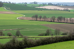 Tuscany in The Netherlands (RIch-ART In PIXELS) Tags: colmont zuidlimburg thenetherlands field grassland grass hills hillside xt20 fujifilmxt20 landscape road kruishoeve tree