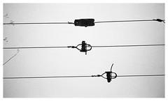 wire fence in the snow 347 (spottiewattie17) Tags: wire fence olympus35rc kodaktrix ddx filmisnotdead