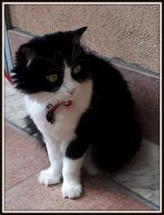 Effetto bianco/nero (magister111) Tags: cleo gatti miao