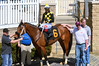"2018-04-13 (46) r4 Edwin Gonzalez on #6 Cannon's Roar for the win (JLeeFleenor) Tags: photos photography md marylandracing maryland marylandhorseracing laurelpark outside outdoors jockey جُوكِي ""赛马骑师"" jinete ""競馬騎手"" dżokej jocheu คนขี่ม้าแข่ง jóquei žokej kilparatsastaja rennreiter fantino ""경마 기수"" жокей jokey người horses thoroughbreds equine equestrian cheval cavalo cavallo cavall caballo pferd paard perd hevonen hest hestur cal kon konj beygir capall ceffyl cuddy yarraman faras alogo soos kuda uma pfeerd koin حصان кон 马 häst άλογο סוס घोड़ा 馬 koń лошадь o"