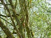 P2030028 (jeanchristophelenglet) Tags: verneuilsurseinefranceétangdurouillard arbre tree arvore écureuil squirrel esquilo