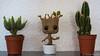 Intruder (Nicolas Rouffiac) Tags: intruder intrus groot cactus plantes plante plant plants