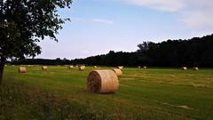 Szalmabálák kaszálás után (Ják közelében) (milankalman) Tags: summer prairie countryside