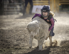024693763286-97-Cowgirl Mutton Busting at the Clark County Fair and Rodeo-2 (Jim There's things half in shadow and in light) Tags: 2018 america april clarkcountyfairandrodeo mojave muttonbusting nevada rodeo southwest usa animal child desert kid sheep sports