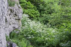 Forest and rocks in the in the Föhrenbergen (a7m2) Tags: kaltenleutgeben viennawoods mödling loweraustria wandern laufen mountainbiking föhrenberge teufelstein flora blumen