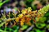 DSC_0014 (jagar41_ Juan Antonio) Tags: flores flor flora amarilla amarillo