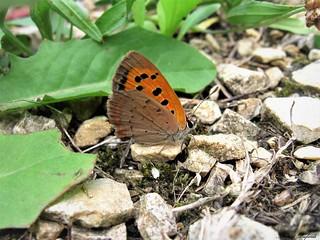Butterfly 1645
