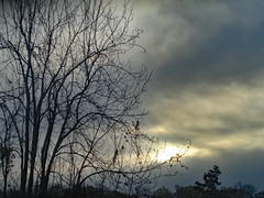 Morning Sky. (dccradio) Tags: lumberton nc northcarolina robesoncounty outside outdoors clouds cloudy overcast nature natural tree trees branches treelimbs treebranches morninglight morning goodmorning photooftheday photo365 project365 sony cybershot dscw830