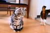 _NCL3078-Edit (chitoroid) Tags: nikond750 nikkor50mmf18g japan hokkaido sapporo cats
