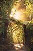 Nouvelle Zélande ~ Road-trip 2017 (Marie l'Amuse) Tags: cascade island waterfall arbre tree paysage landscape nature amazing beau beautiful scenic île autumn automne fall nikon d7200 pacific pacifique vacances holidays road trip new zealand nouvelle zélande wild sauvage quiet calm calme foret forest path chemin vert green riviere mountainscape nikkor dream vierge rainforest primaire native sunset coucher soleil rayons lumière ray light warm chaud waiau coromandel north auckland egan park travel voyage aventure adventure woods
