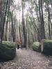 Wonder (Keith Midson) Tags: boy child forest mtwellington kunanyi tasmania hobart track trail bushwalk walking hike