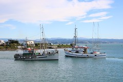 Coming and going (Karen Pincott) Tags: boats fishingboats napier newzealand sea boatharbour hawkesbay autumn
